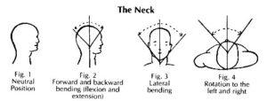 movimento cervicale