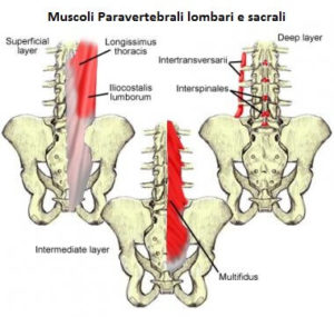muscoli sacroileite