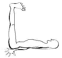 posizione mezieres