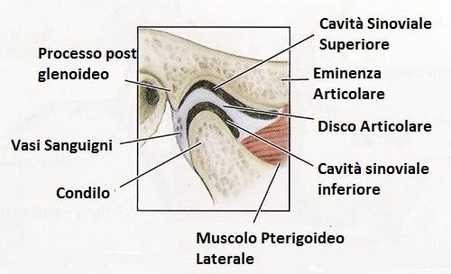 Anatomia Temporo mandibolare