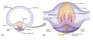 Canali semicircolari