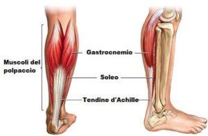 muscoli del polpaccio