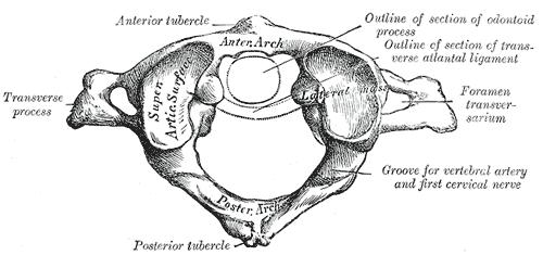 atlante cervicale