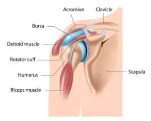 Borse sierose della spalla