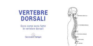 vertebre dorsali