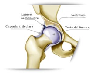 Anatomia articolazione anca