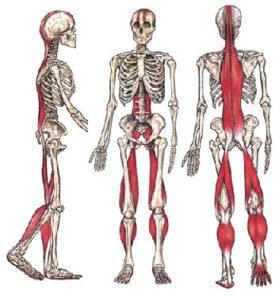 allungamento catena cinetica posteriore