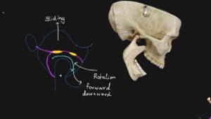 movimento mandibola