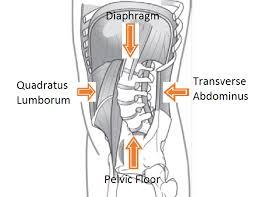 diaframma pelvico e zona lombare